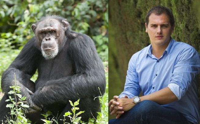 El poder és un afrodisíac tant pels humans com pels ximpanzés, però per alguns individus més que per d'altres...
